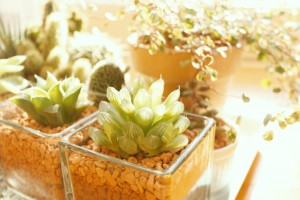 https---www.pakutaso.com-assets_c-2015-06-AXIS93_gardens-thumb-1000xauto-17034